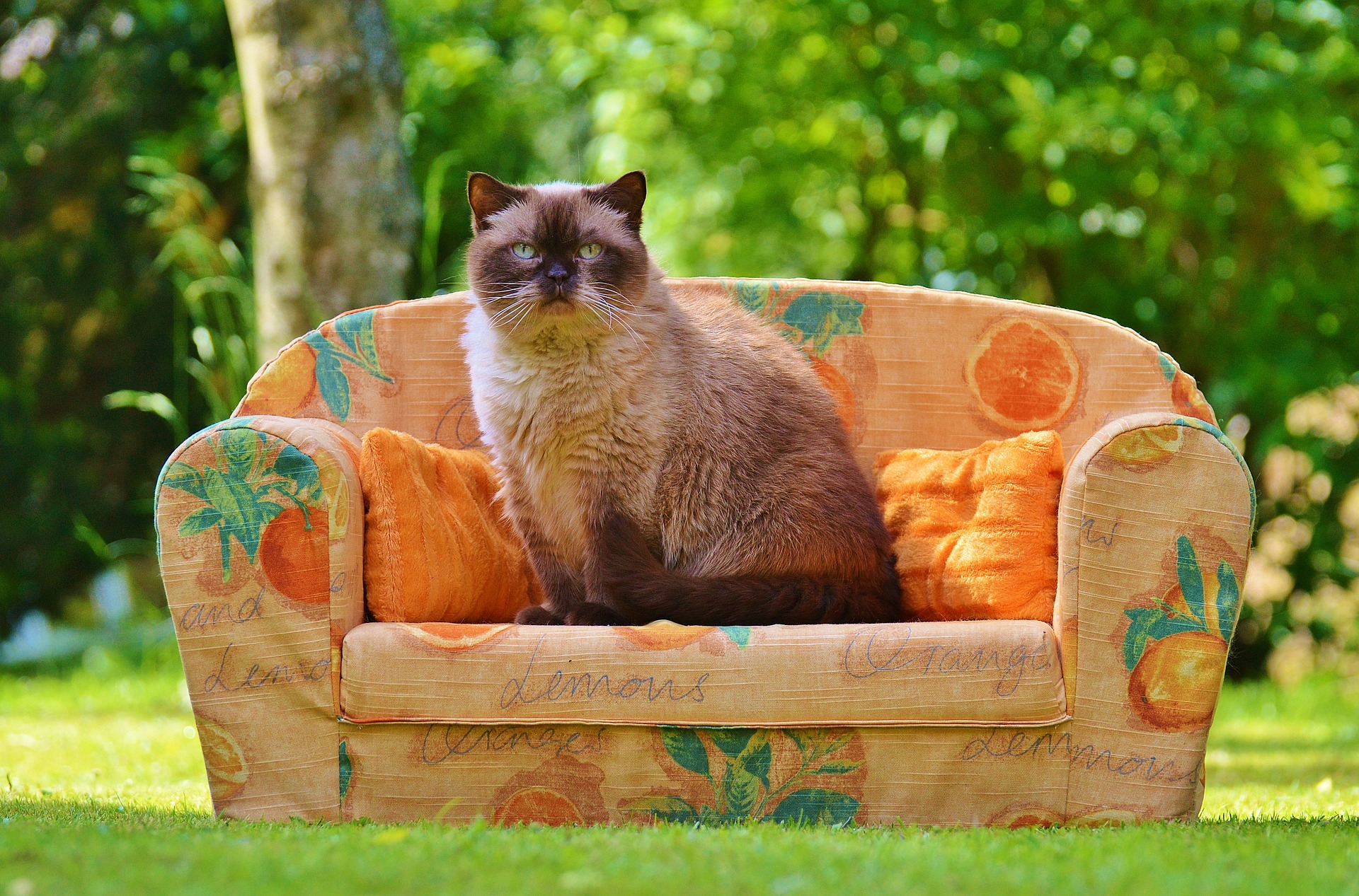 Cat On A Sofa
